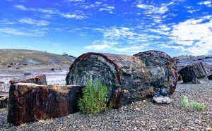 Lymon Lake State Park, Petroglyphs, Petrified Forest and Painted Desert